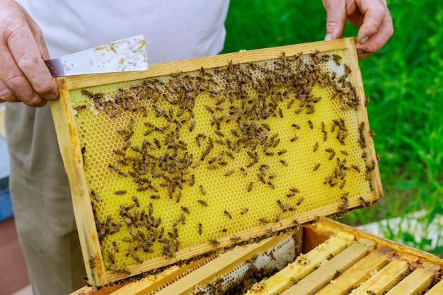 Imker arbeitet mit bienen, die im sommer in der nähe von bienenstöcken am bienenhaus stehen und an einem sonnigen tag einen rahmen voller bienen inspizieren.