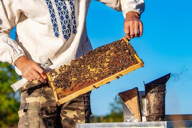 Imker arbeitet mit bienen und bienenstöcken am bienenhaus. bienen auf waben. rahmen eines bienenstocks. bienenzucht. honig.
