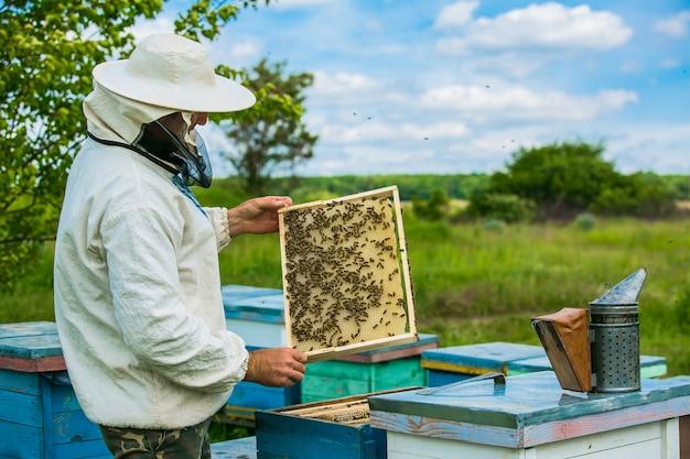 Imker arbeitet mit bienen und bienenstöcken am bienenhaus. rahmen eines bienenstocks