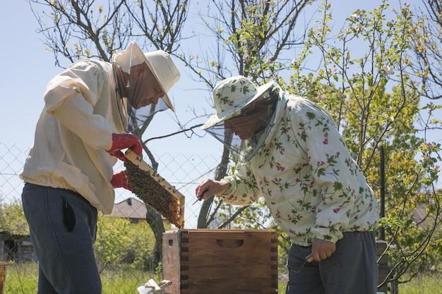 Imker arbeitet mit bienen und bienenstöcken am bienenstand