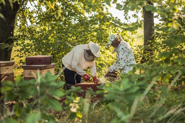 Imker arbeitet mit bienen und bienenstöcken an der imkerei authentische szene des lebens im garten
