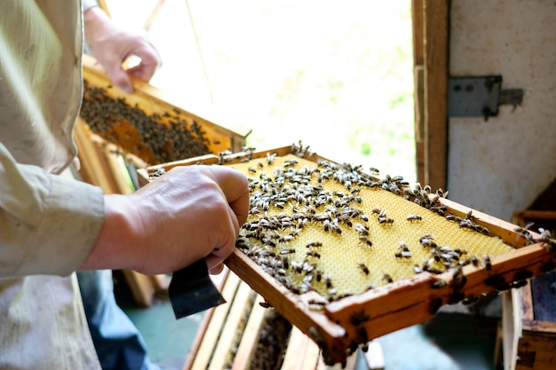 Imker beobachtet bienenstock