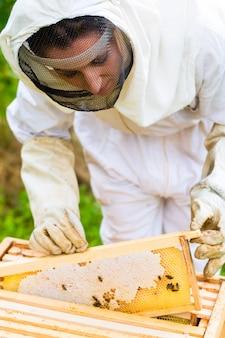 Imker, der beeyard und bienen kontrolliert
