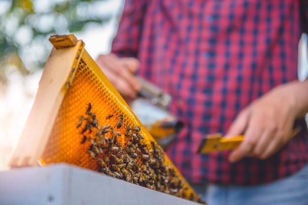 Imker, der bienenstöcke überprüft