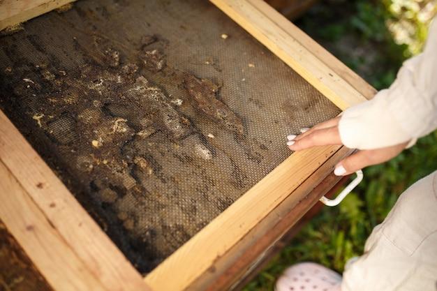 Imker, der die hölzerne bienenstockoberseite geklebt mit propolis öffnet