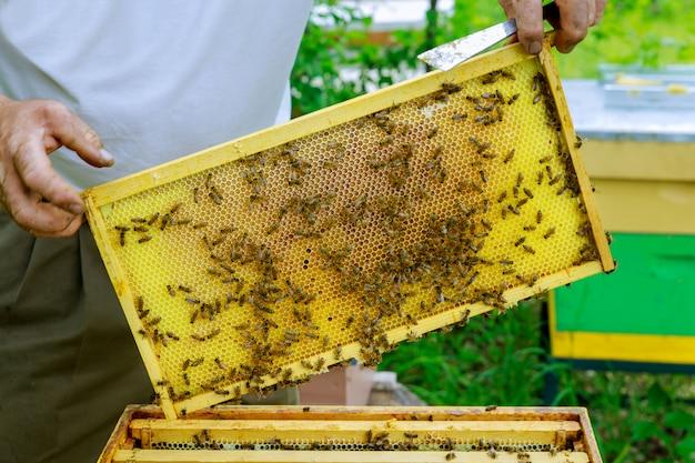 Imker hält eine pflege für rahmen in der nähe der bienenstöcke ein mann überprüft die bienenstöcke imkerei.