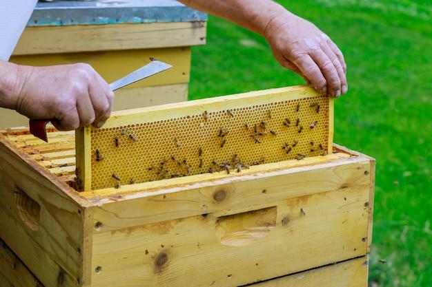 Imker imker arbeitet mit bienen in der nähe von bienenstöcken und nimmt rahmen mit waben zur inspektion heraus