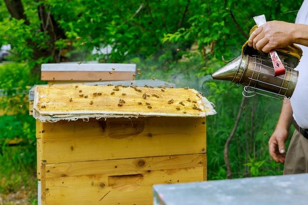 Imker imker behandelt die bienenstöcke mit rauch, bevor er den zustand der bienenfamilie überprüft