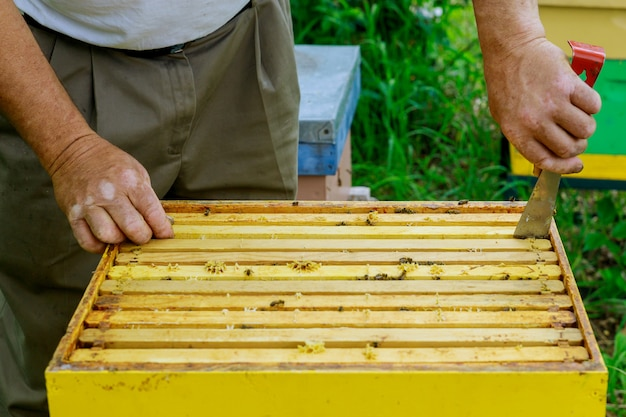 Imker imkerei arbeitet mit bienen in der nähe von bienenstöcken und nimmt rahmen mit waben zur inspektion heraus
