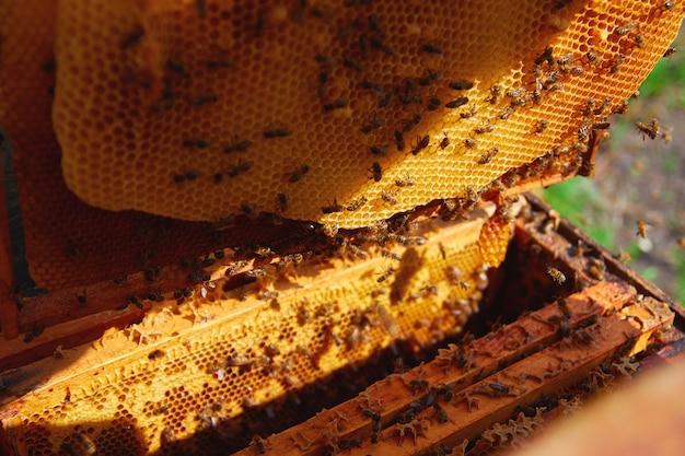 Imker in handschuhen und im kostüm eines imkers prüft bienenstöcke mit bienen, bereitet sich auf das sammeln von honig vor und pflegt rahmen mit waben