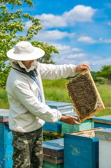 Imker inspiziert rahmen mit bienenwabe voller bienen. bienenhauskonzept. imkertätigkeiten und arbeit. rahmen eines bienenstocks. imkerei