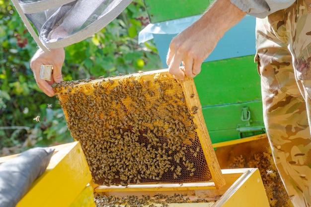 Imker klaut bienen aus dem rahmen im bienenhaus