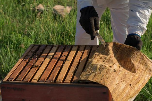 Imker öffnet den bienenstock, rahmen mit waben und stoff mit propolis sind sichtbar