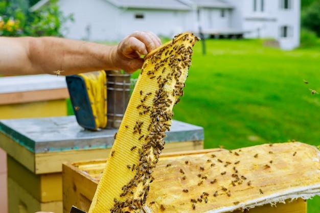 Imker überprüft bienenstöcke mit bienen und kümmert sich um rahmen.