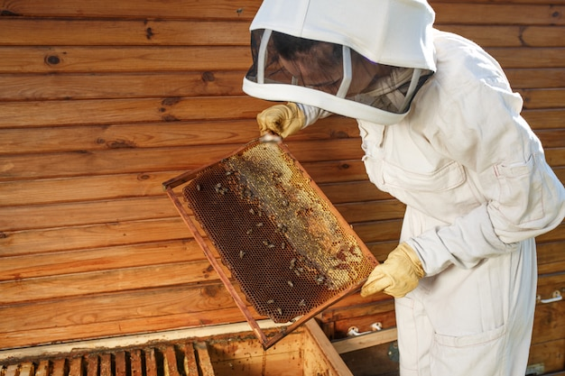 Imker zieht aus dem bienenstock einen holzrahmen mit bienenwabe heraus. sammle honig. imkerei.