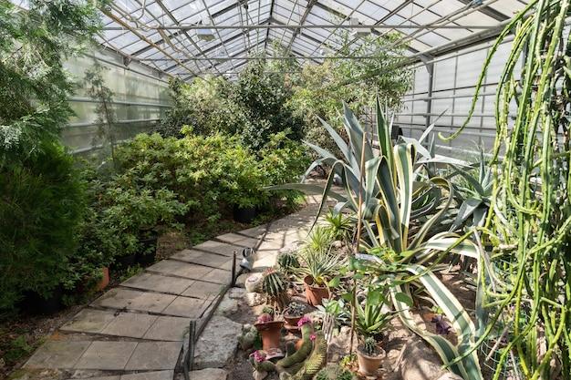 Immergrüne pflanzen und kakteen im gewächshaus der orangerie des botanischen gartens mit exotischen wüstenpflanzen wachsen