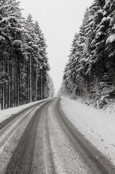 Immergrüner winterwald und straße