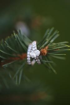 Immergrüner Ring