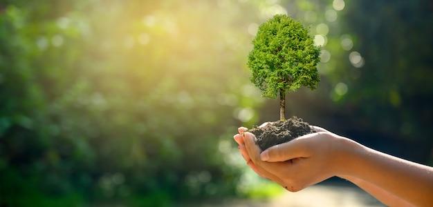 In den händen von bäumen, die sämlinge wachsen lassen. bokeh grüner hintergrund weibliche hand, die baum auf naturfeldgras-waldschutzkonzept hält