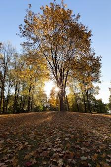 In der herbstsaison hautnah am park Premium Fotos