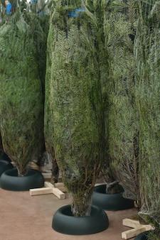 In ein netz gewickelte weihnachtsbäume zum verkauf auf einem markt
