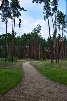 In einem kiefernsommerwaldpark wird ein breiter gefliester weg ins rechte licht gerückt. gegen den blauen himmel