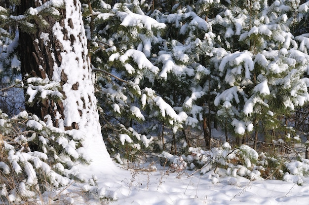 In einem kinderzimmer wachsen kleine, flauschige, schneebedeckte tannen