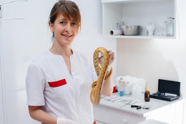 In einer modernen tierklinik wird eine gelbe schlange untersucht. veterinär klinik.