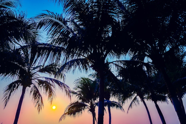 Indien insel horizon muster palm