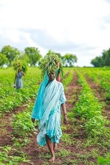 Indische arbeit im baumwollfeld