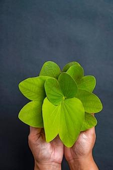Indische festdussehra, grünes blatt