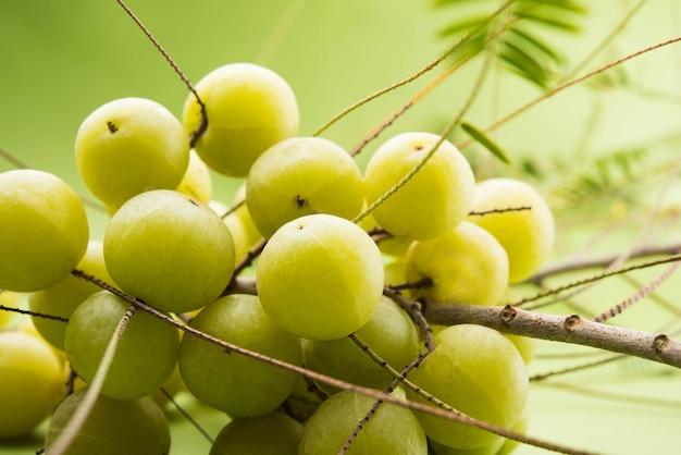 Indische stachelbeere oder amla-frucht oder phyllanthus emblica, selektiver fokus