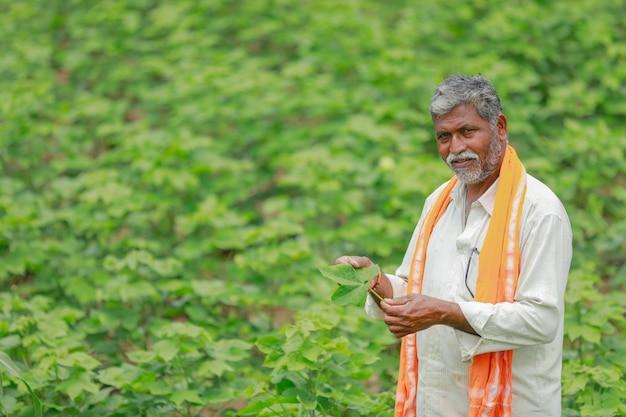 Indischer bauer am baumwollfeld, indien