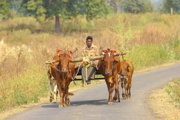 Indischer bauer auf stierkarren