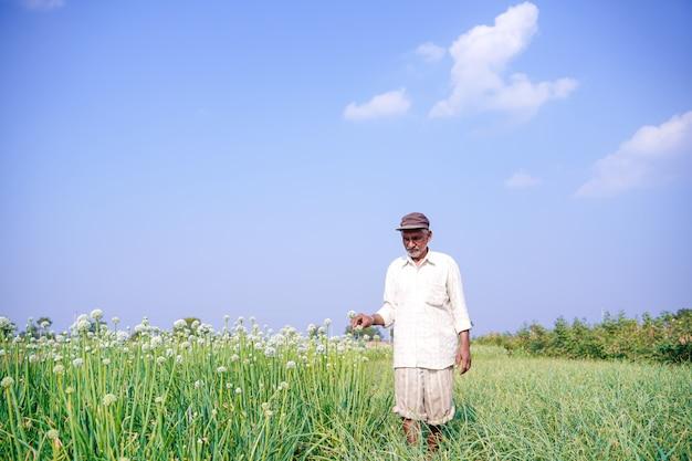 Indischer bauer, der im zwiebelfeld steht