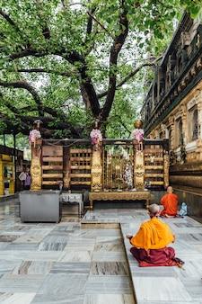 Indischer buddhistischer mönch in der meditation nahe dem bodhi-baum