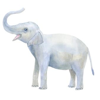 Indischer süßer elefantenbaby bläst seinen stamm. hand gezeichnete aquarellillustration. isoliert.