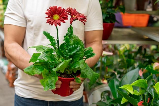 Individuelle holding elegante zimmerpflanze