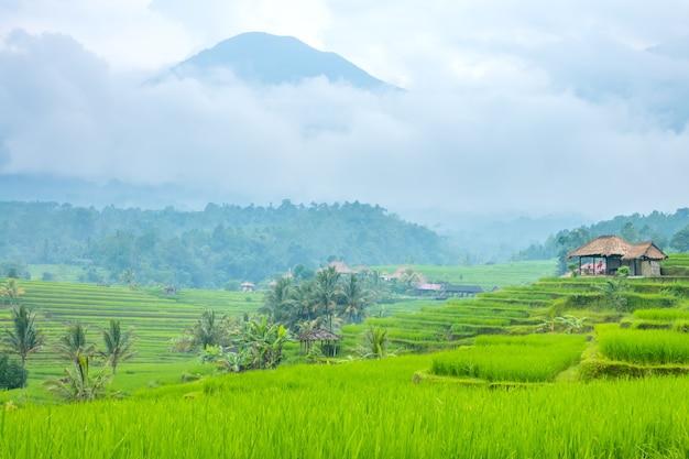Indonesien. ein kleines dorf und reisfelder auf der insel java. nebel nach regen und hochgebirge