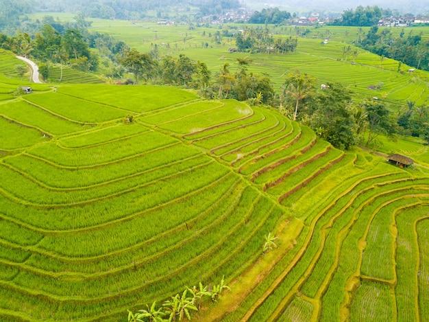 Indonesien. terrassen mit mehrstöckigen reisfeldern, palmen und hütten. luftaufnahme