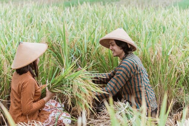 Indonesische bauern, die auf dem gebiet der grünen landwirtschaft arbeiten, mann und frau arbeiten zusammen, pflücken blätter, ernten, dörfliches leben.