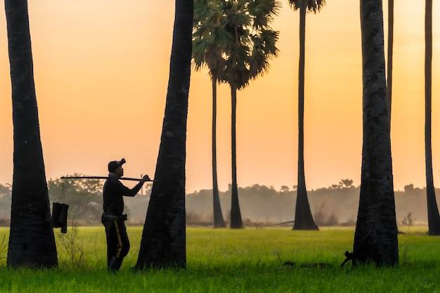 Indonesischer landwirt der asiatischen männer, der im reis firld arbeitet. halten sie tan palmzucker bär viel am morgen ist sonnenaufgang.