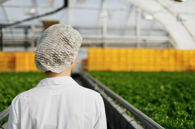 Ingenieurin der biotechnologie, die eine pflanze auf krankheit untersucht