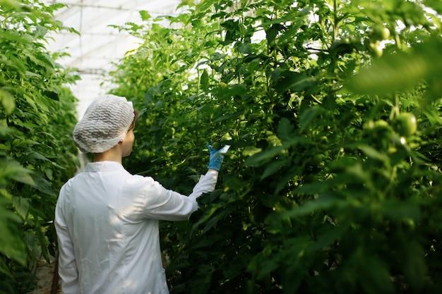 Ingenieurin der biotechnologie, die pflanzenblatt auf krankheit im gewächshaus untersucht