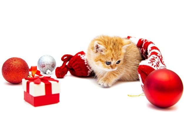 Ingwer britisches kätzchen mit weihnachtsdekor. getrennt auf weiß.