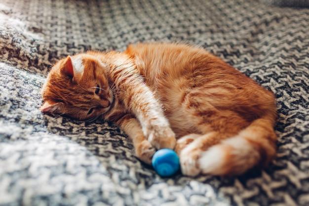 Ingwer-katze, die mit ball auf couch im wohnzimmer zu hause spielt