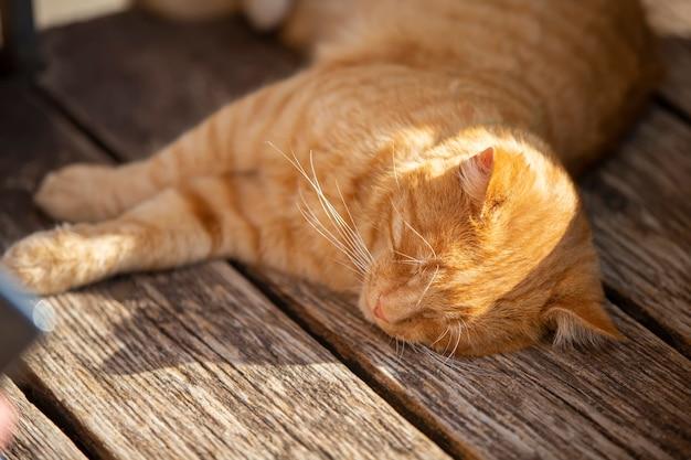 Ingwer-straßenkatze schläft auf einer holzbank in der sonne.