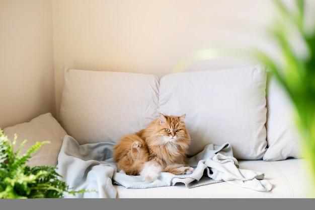 Ingwerkatze, die auf sofa zu hause sitzt