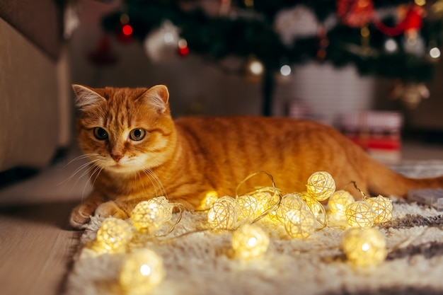 Ingwerkatze, die mit girlande unter weihnachtsbaum spielt. weihnachten und neujahr konzept