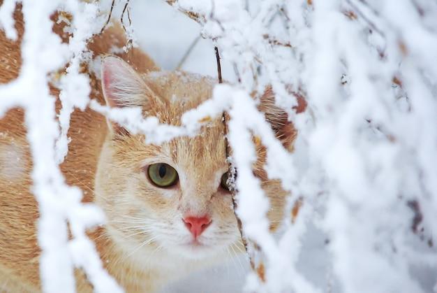 Ingwerkatze im schneebedeckten garten